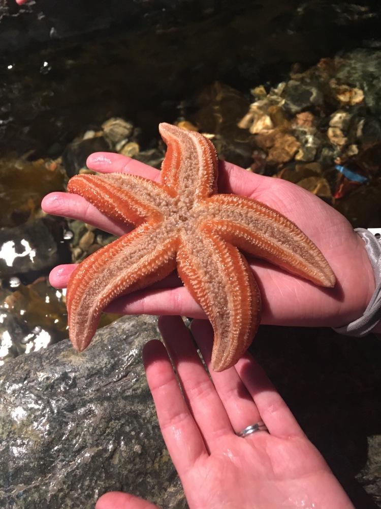 étoile-de-mer-exploramer-sainte-anne-des-monts-gaspesie-1