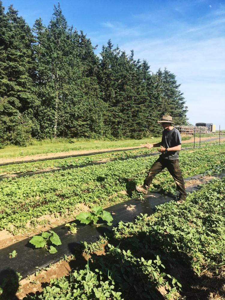 farmer-tour-inn-at-bay-fortune-prince-edward-island